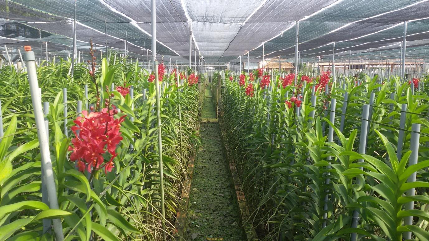Nguyên tắc cần đảm bảo khi chọn mua lưới che nắng cho cây trồng
