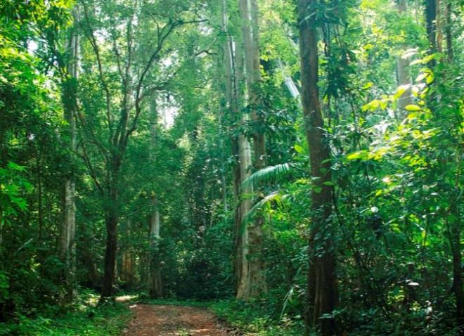 vườn Quốc gia Cát Tiên với các báu vật vô giá